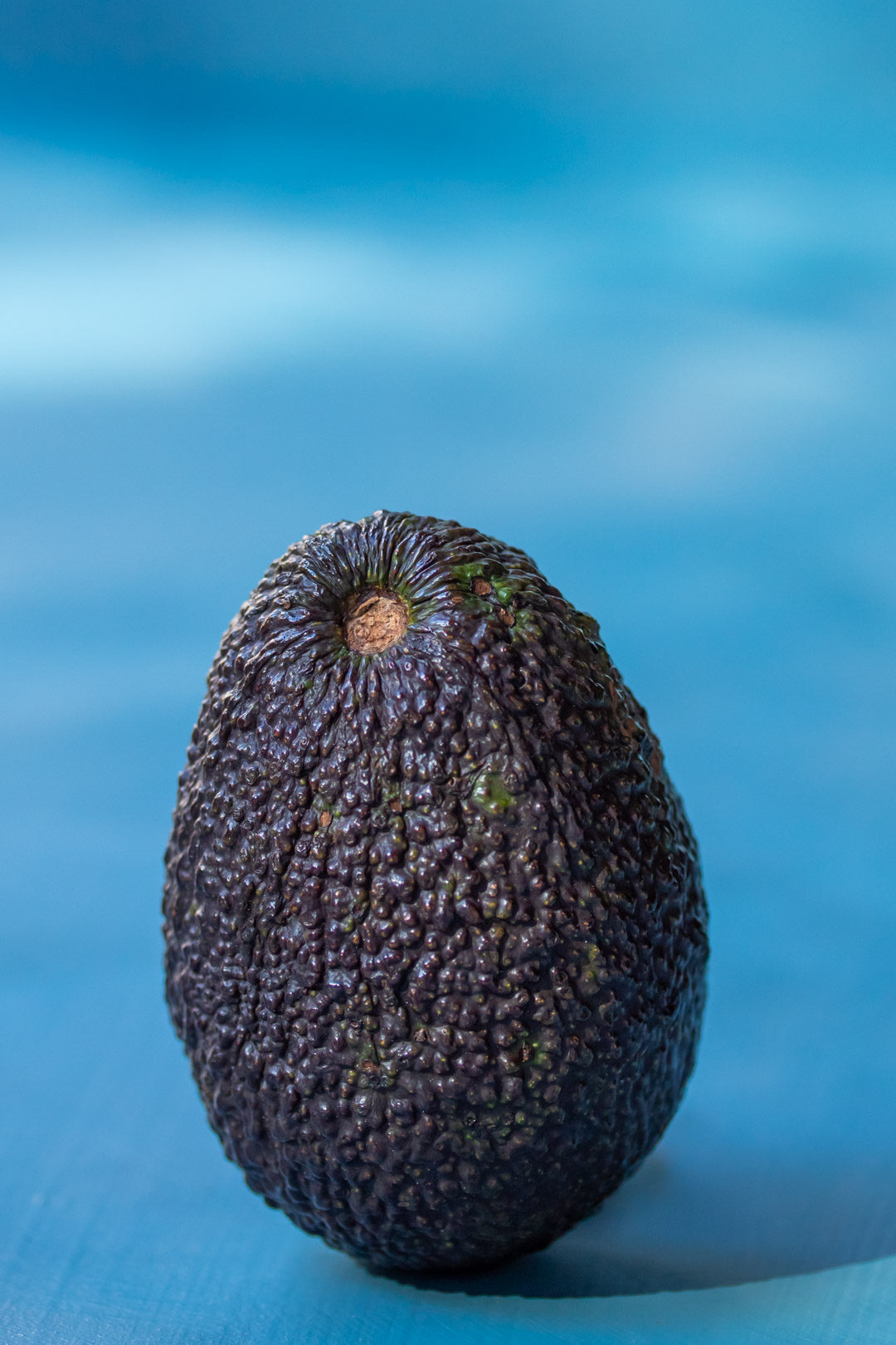 avocado still life