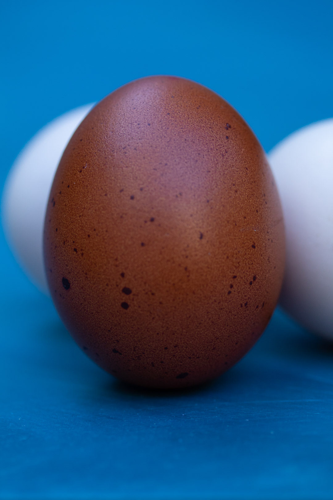 brown speckled egg close up