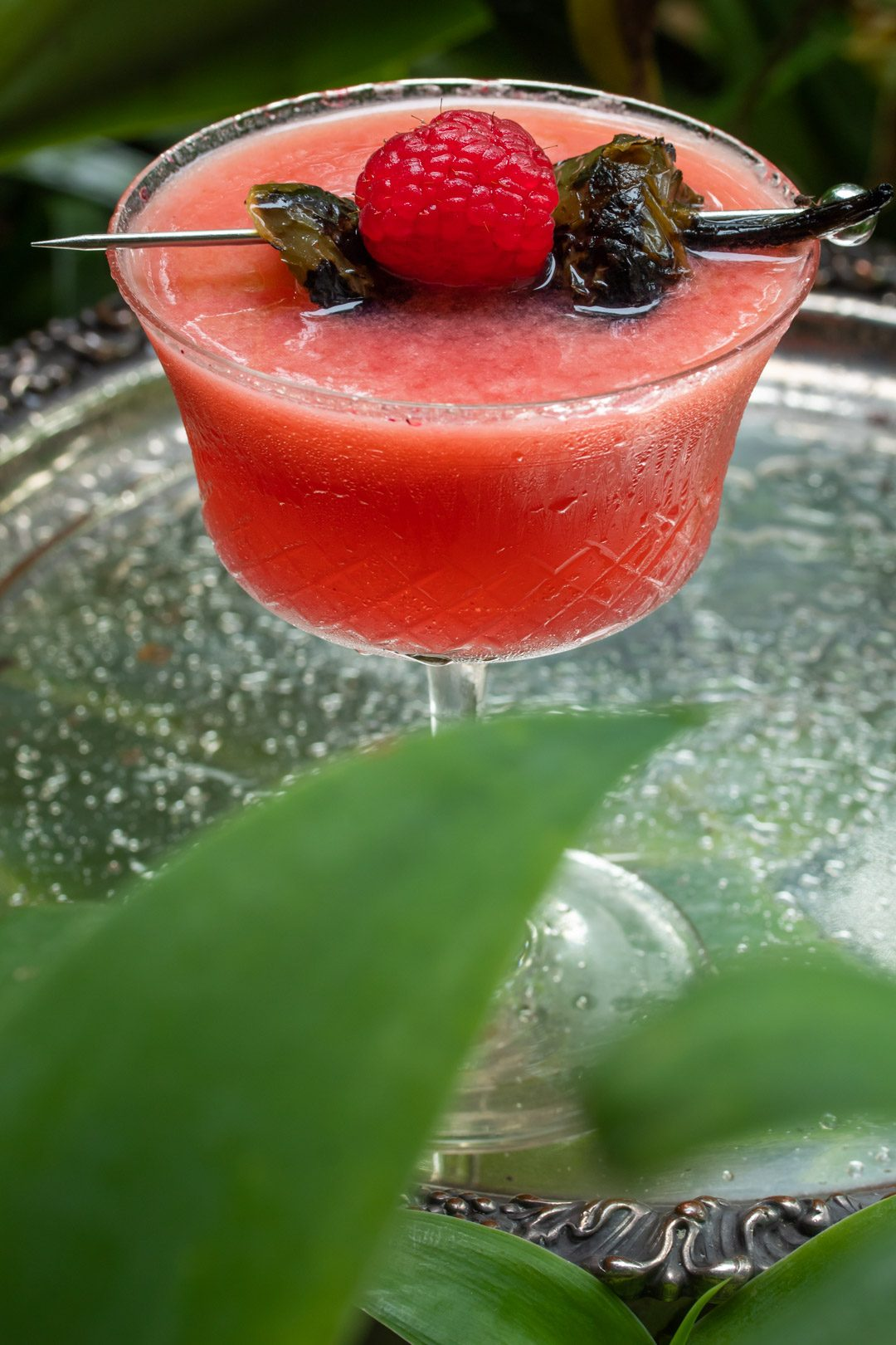 Pickled jalapeno and raspberry margarita cocktail with hibiscus sugar: agave plant in foreground