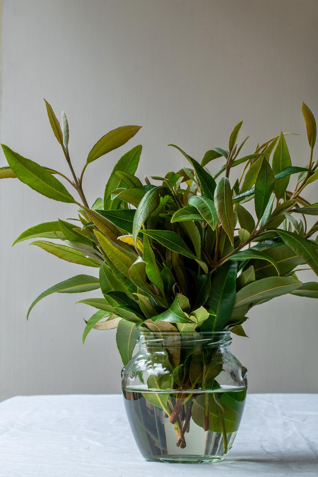 lemon myrtle leaves in glass jar of water for lemon myrtle honey syrup